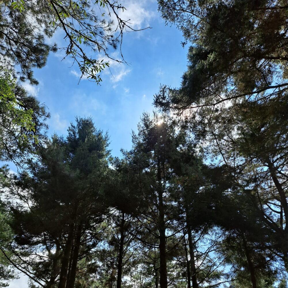 東埔山莊-樹林與天空
